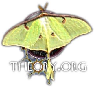Theory.org Logo